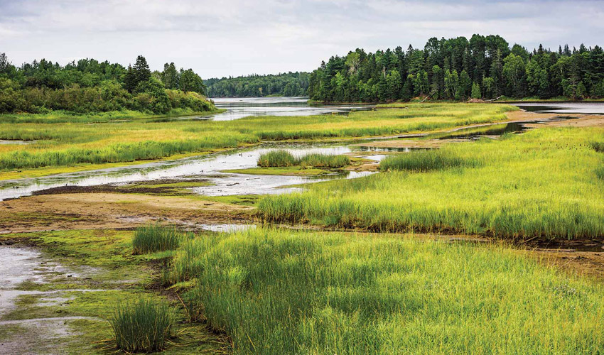 Photo of disturbed land in the boreal forest.