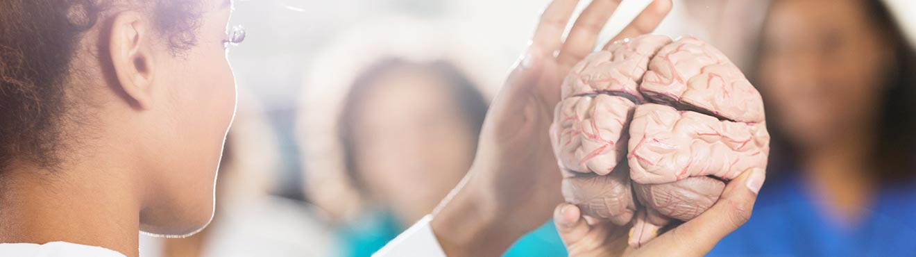 A student holding a model of a brain.